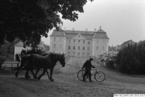 Arbetshästar. Foto Stig T Karlsson 1961