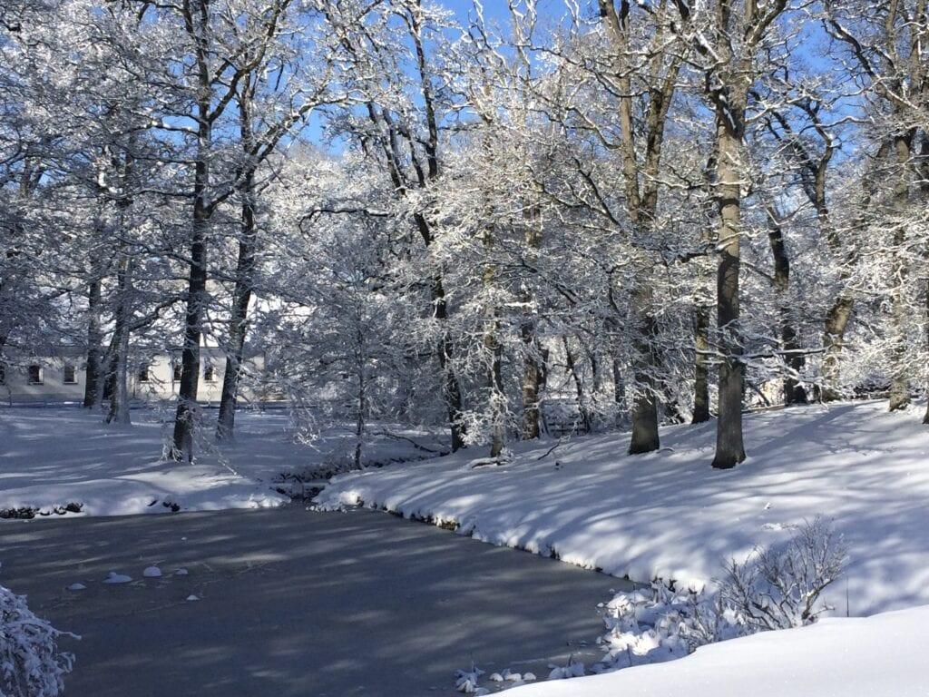 Södra dammen om vintern