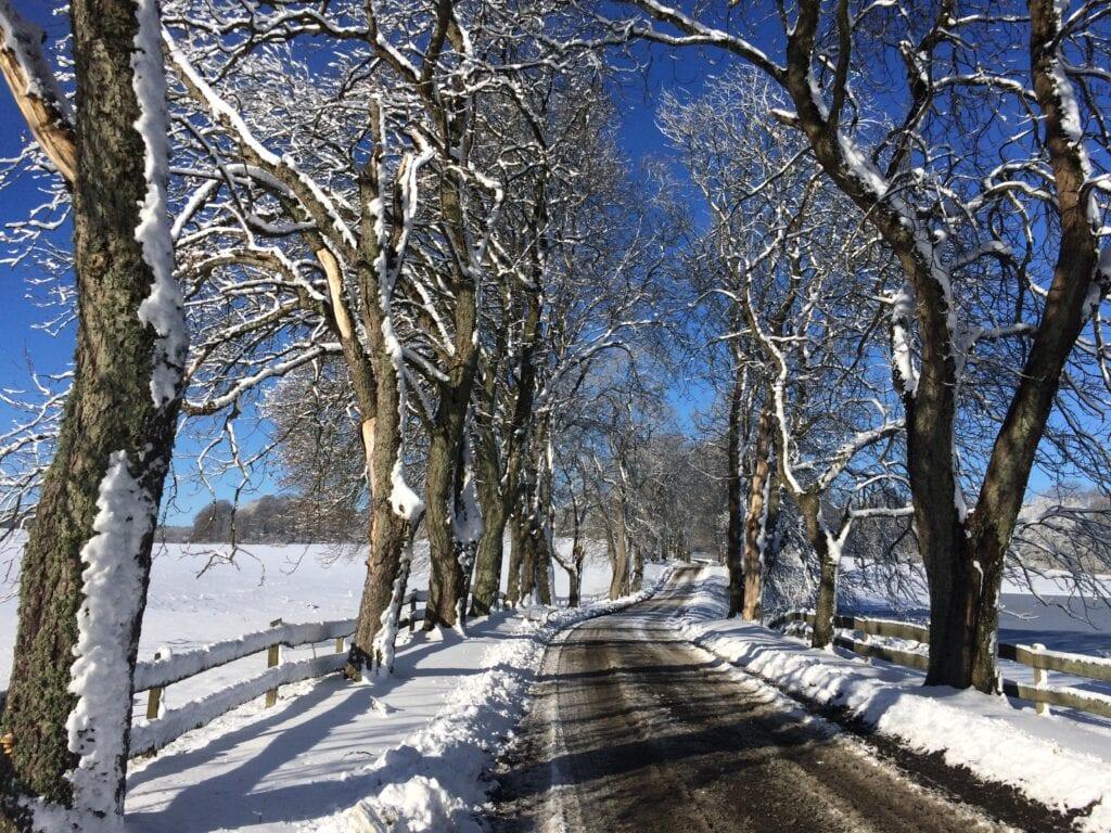 Allé om vintern på Christinehof slott